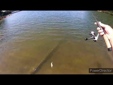 Bass Fishing Lake Lanier From The Bank
