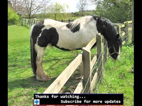 Fencing For Horses | Fences Ideas For Pets