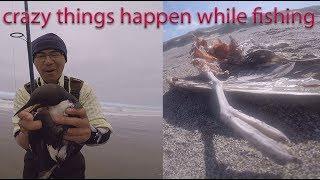Crazy Bird Fishing video - weird things I saw while fishing