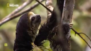 Скрытый мир Амазонки