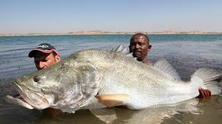 MONSTER NILE PERCH 114 LB IN LAKE NASSER EGYPT - HD by CATFISHING WORLD