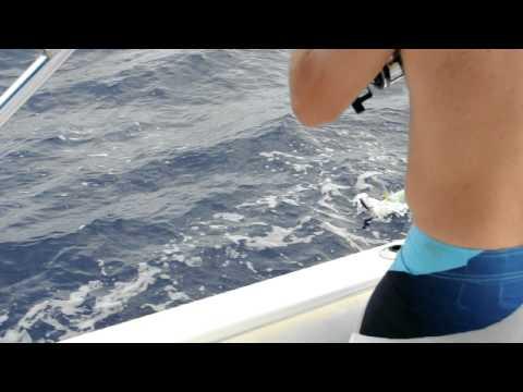 Offshore fishing Caribbean