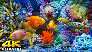 Aquarium 4K VIDEO (ULTRA HD)  Sea Animals With Relaxing Music  Rare & Colorful Sea Life Video
