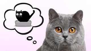 Funny cat needs to poop 💩