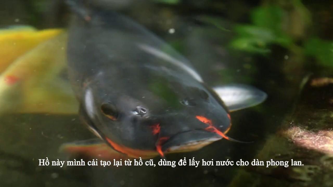Hồ cá Koi nhỏ và đơn giản, tự làm – Simple Koi Pond Filter