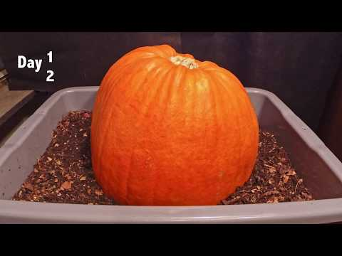 Watch These Worms Devour A Pumpkin in This 100-Second Compost Timelapse [Video]