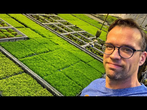 Exclusive Tour Of The Tropica Aquarium Plants Moss Facility