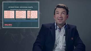 Цистит:  причины, диагностика и лечение