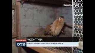 Судьба резидента: свердловчанин обнаружил в огороде бекаса
