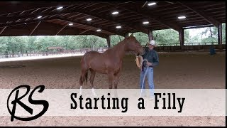 Handling and Starting a Two Year Old Filly
