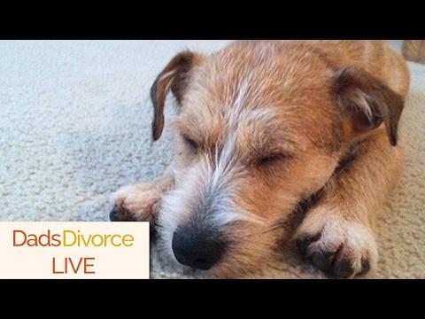 Pet Custody Becoming A Bigger Part Of Divorce Law - DadsDivorce LIVE