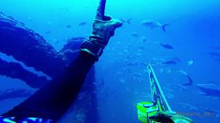 free-diving and spearfishing - it's a lifestyle....