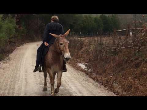 Draft John mule for sale