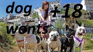 Прикол собака хочет девушку dog wants a Woman