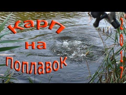 карп на поплавок в камышах видео