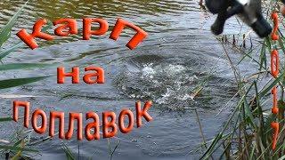 карп на поплавочную удочку,ловля в камышах,на кукурузу
