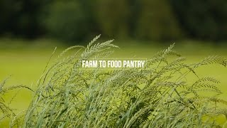 Farm to Food Pantry