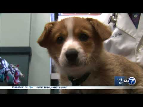 United suspends new reservations for pets in cargo hold