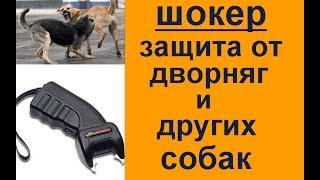 На вашу собаку нападают? защита от дворняг и других собак - Шокер   законно