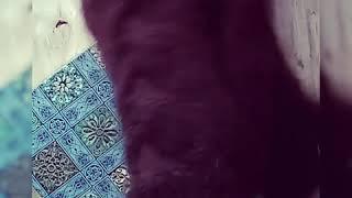 Варежки спицами , узор коса