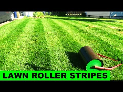 Lawn Striping with a Lawn Roller