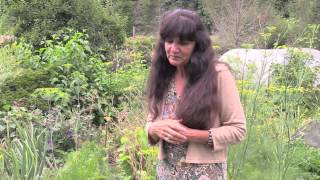 Rosemary Gladstar's Garden Wisdoms: Cilantro, Dill, and Carrot Family Plants