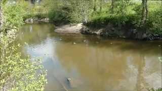 Découverte Nature ... Parc des Moines à Cholet