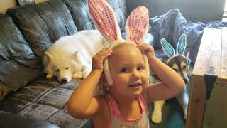 Cute Toddler Plays Dress Up With Snowdogs