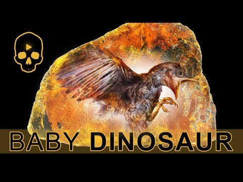 Remarkably 'Complete' 99-Million-Year-Old Baby Bird Found Fossilized in Amber!