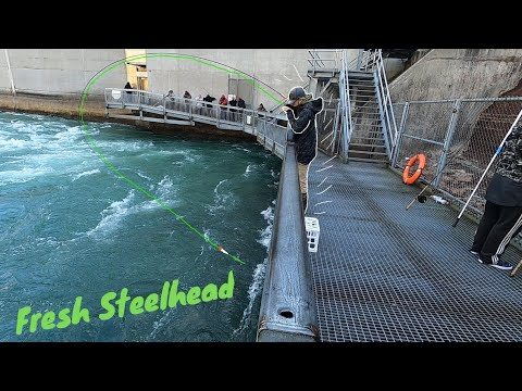 Float Fishing For Early STEELHEAD | Fishing The NIAGARA RIVER