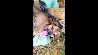 Кошка сосёт у пса!