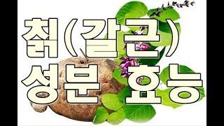 칡(kudzu root, 갈근)의 효능