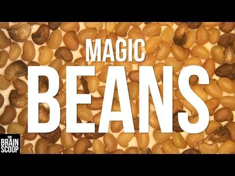 Restoring Habitats with Magic Beans