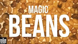 Restoring Habitats With Magic Beans