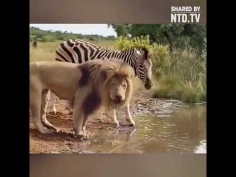 All animals living together in a jungle by NTD.tv