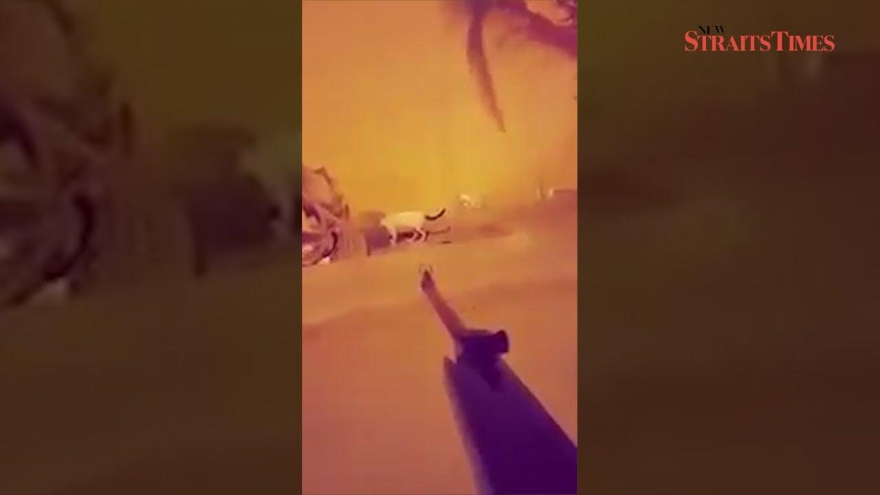 Saudi man casually kills cats, uploads video to Snapchat