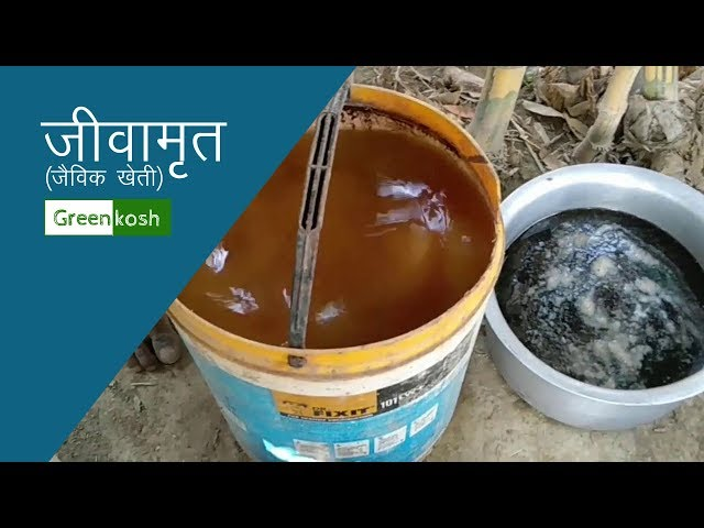 ??????? ????? ?? ???? ???? ????? - How to make Jeev Amrit (Jeevamrit) for Organic Farming