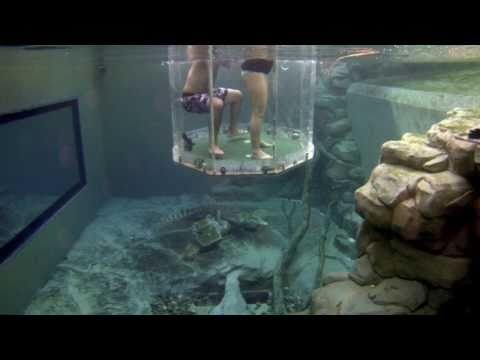 Cage of Death: Swimming with Crocodiles! Australia