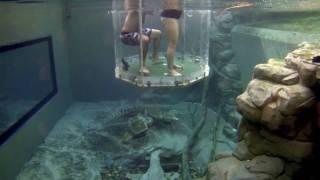 Cage of Death: Swimming with Crocodiles! Australia
