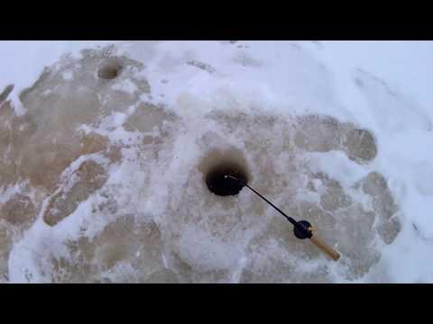 Рыбалка Вологодская область, Тотьма, река Царева, первый лед