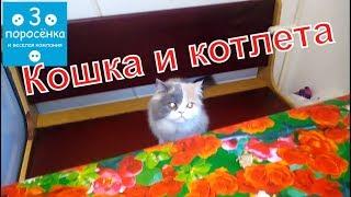 Кошка Риска и котлета. Cat Risk and Patty