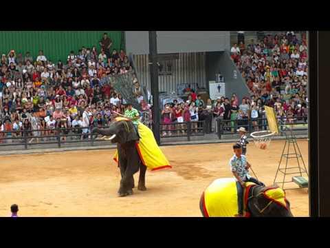 ELEPHANT (XIẾC VOI} IN THÁI LAN