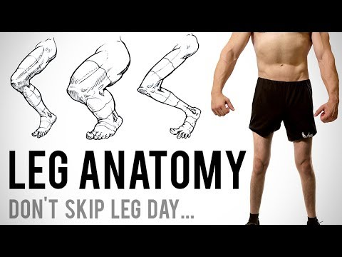 Leg Anatomy for Artists - Don't Skip Leg Day...
