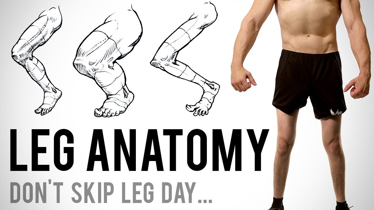 Leg Anatomy for Artists - Don\'t Skip Leg Day... - YouTube