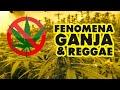 Fenomena Ganja & Reggae