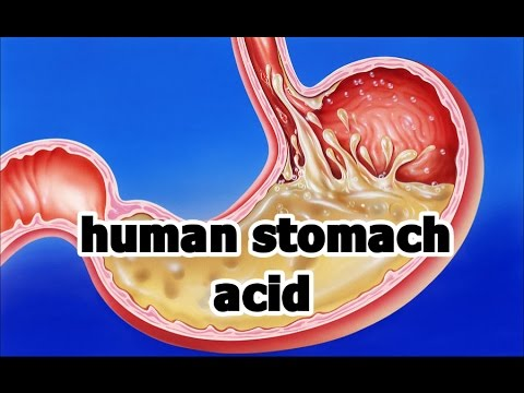 Human stomach acid in ...