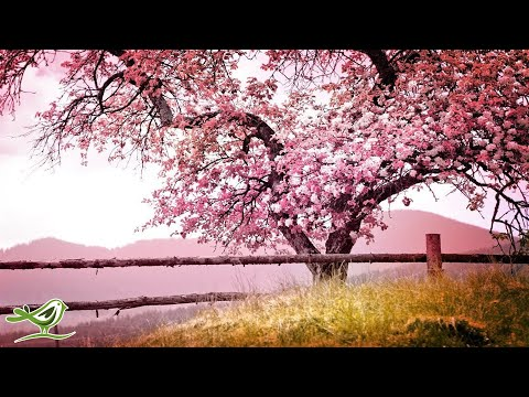 Relaxing Piano Music: Romantic Music, Beautiful Relaxing Mus
