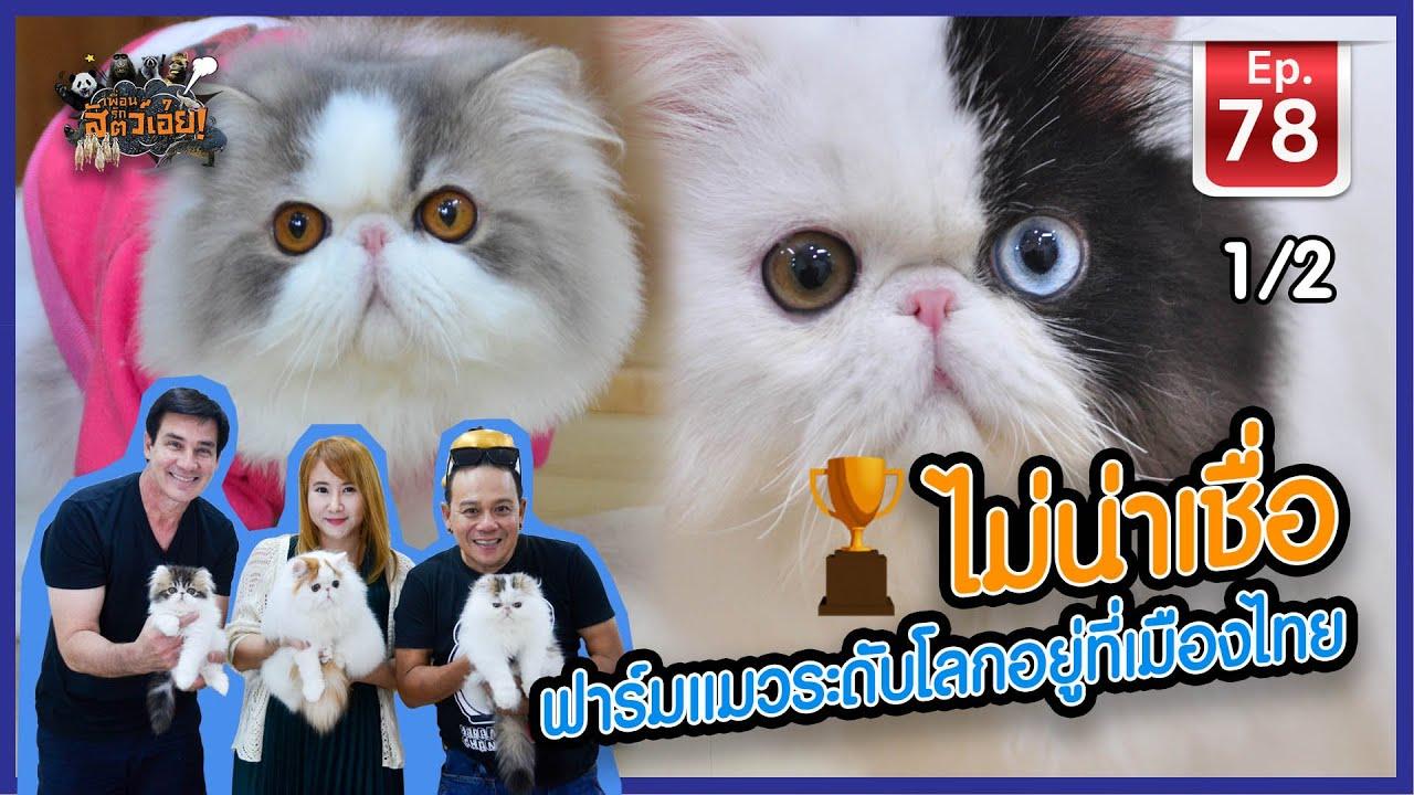 ไม่น่าเชื่อฟาร์มแมวระดับโลกอยู่ที่เมืองไทย - เพื่อนรักสัตว์เอ้ย EP.78 [1/2]