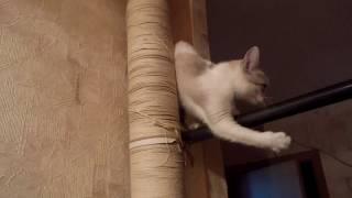 Супер - когтеточка для кошки