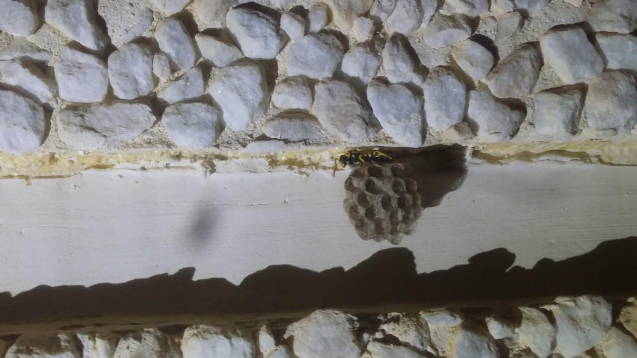 Una avispa reina construyendo su casa youtube for Costruendo su una casa di ranch